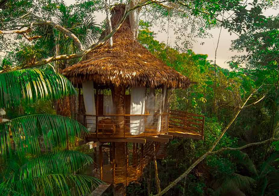Treehouse Lodge The Amazon Iquitos Peruperu Holiday