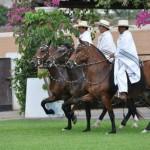 Peru Holiday Adventures | Peruvian Paso Fino Horses Show