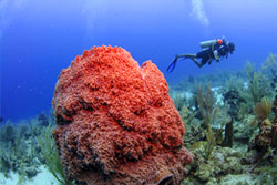 Belize Travel Vacations